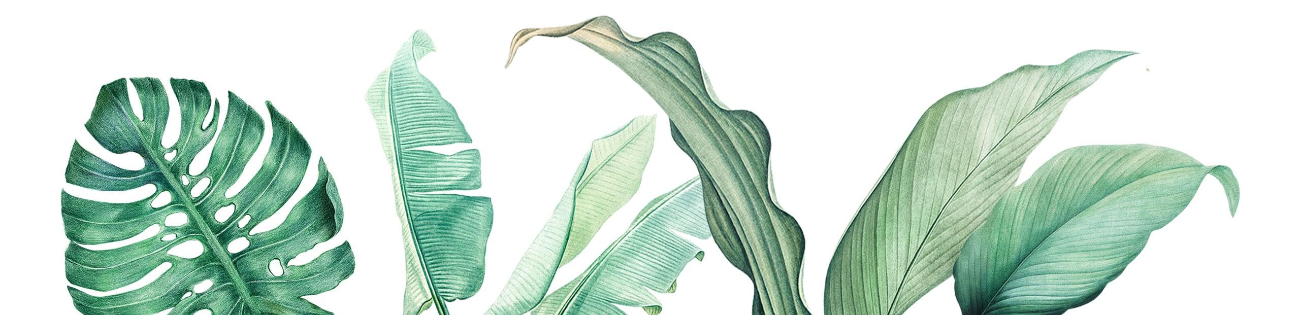 PlantsLong-2
