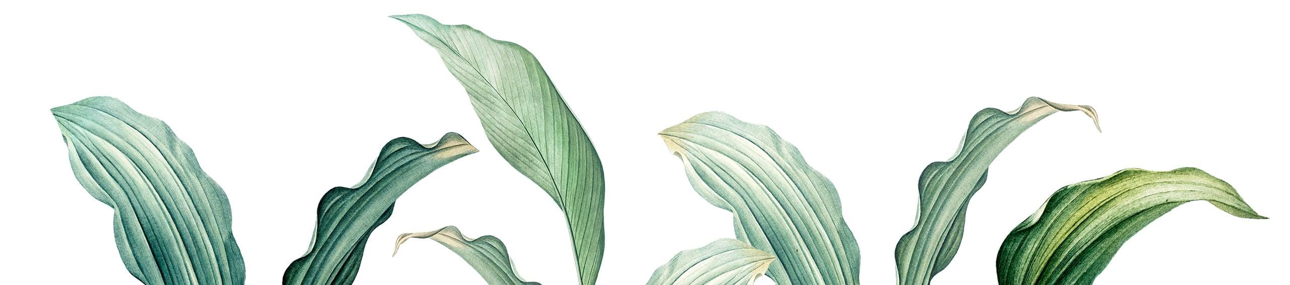 PlantsLong